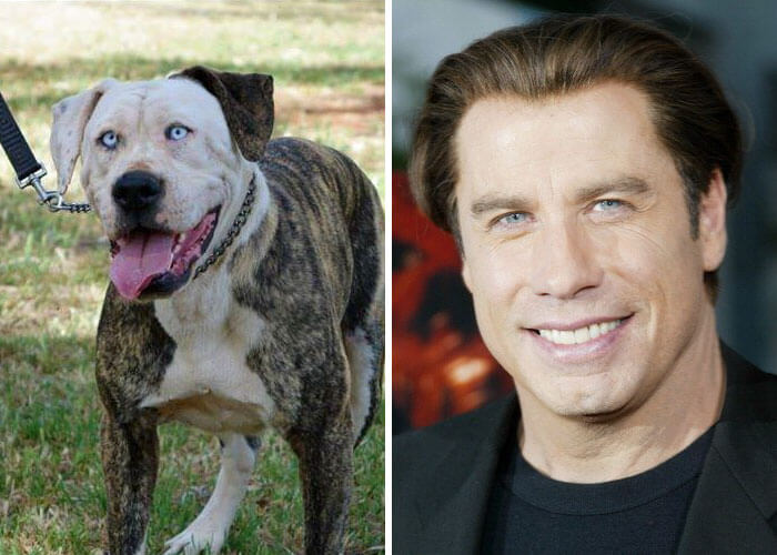 25 Animal-Celebrity Lookalikes That Prove 'Character' Is Not Exclusive To Humans Alone