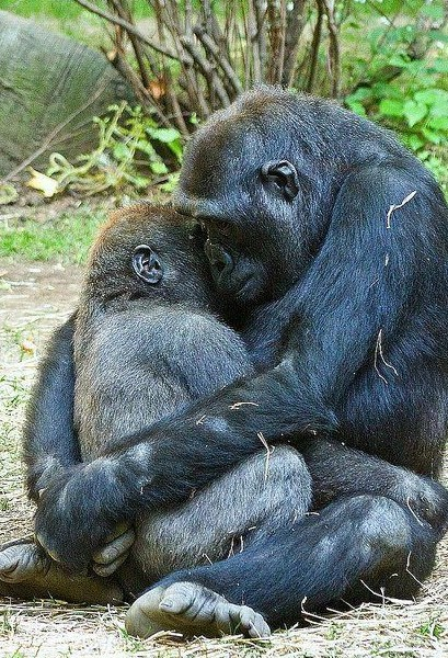 5 Unexpected Science-Based Examples Of Complex Animal Emotion You Need To Know About