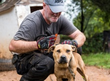 http://www.aspca.org/news/victory-animal-fighting-victims-us-sentencing-commission-gets-tough