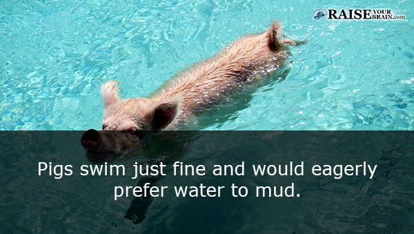 10 Astoundingly Adorable Reasons To Love Pigs Not Eat Them (Must Share)