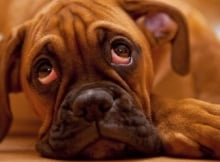 Is Your Pet Lonely and Bored?