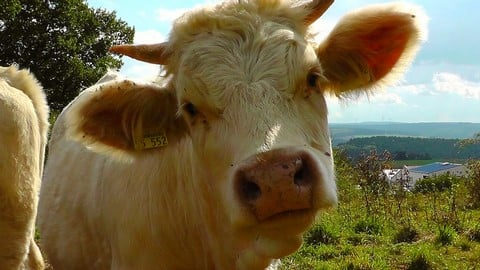 10 Fascinating Facts About Animal Sentience Every Vegan Has To Know