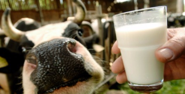 Dairy Farmers Panicking As Sales Plummet! More Youngsters Are Shunning Milk For Good!