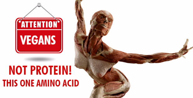 NOT Protein! THIS ONE Amino Acid Is What Vegans Should