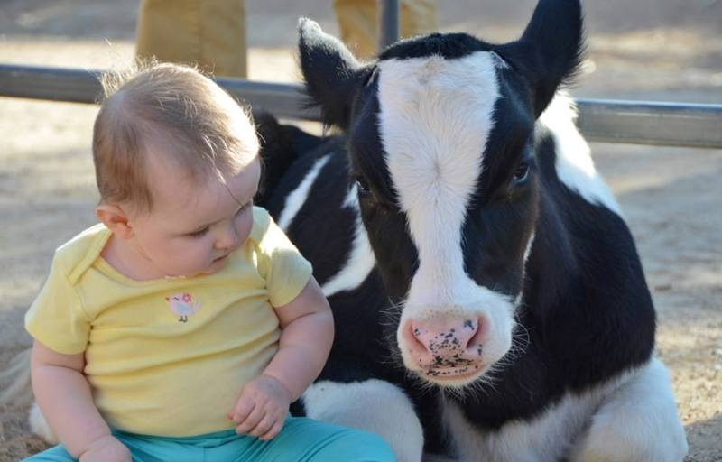Heart Warming Photos That Show Farm Animals Feel As Deeply As We Do!