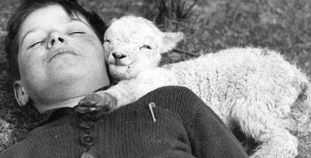 12 Truly Endearing Photos That Show Farm Animals Feel As Deeply As We Do!