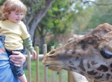 10 Disturbing Little-Known Facts About Zoos Any Vegan Should Know (And Pass On)