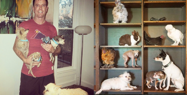 This Awesome Man Devoted His Life To Saving Old Dogs No One Wants