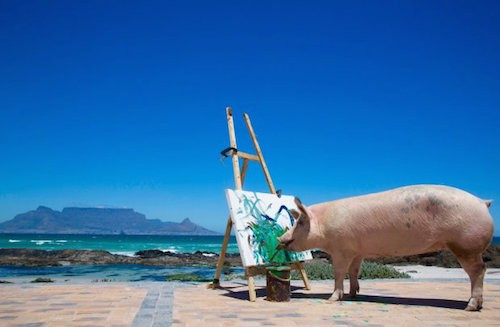 Meet Pigcasso – The Sweet Rescue Pig Whose Masterpieces Will Amaze You!