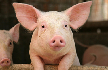 8 Things You Can Do Right Now To Help Animals On Factory Farms