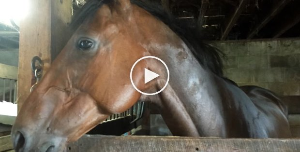 Who Rescued Whom? Grab a Tissue Before Watching This Horse Rescue Story