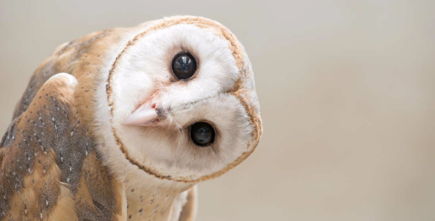 If You Don't Want To Know What An Owl Looks Like Naked, Look Away Now