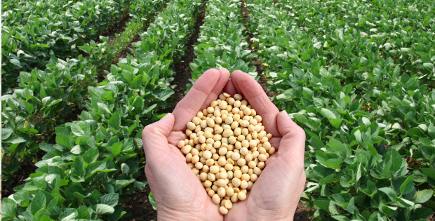 Soy And Cancer Growth: The Scientifically-Backed Truth