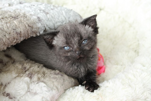 Lost Newborn Kitten Stunned His Rescuers When He Began To Change Color