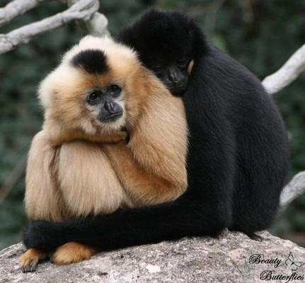 Love Is In The Air! 5 Animal Species That Fall In Love For A Lifetime