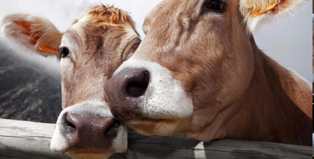 Farm Animals Talk To Each Other Just Like Dolphins Do! And Here's The Evidence: