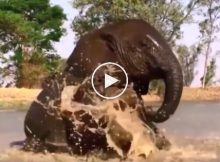 Watching These Rescued Baby Elephants Splash Is ALL You Need Today!