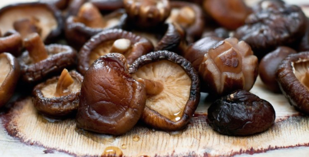 Vegan Joy Alert! Mushroom Meat Is Coming Soon! (and it's pure non-GMO stuff)