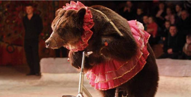 This Country Banned ALL Animal Circus Acts (And It's One Of The Biggest Circus Industries)