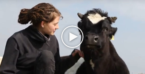 Vegan Activist Put to Shame By World's Happiest Cow