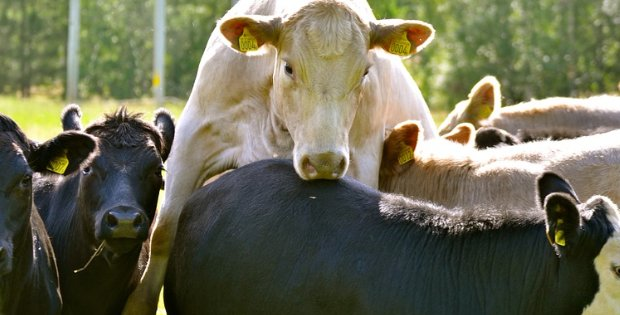 Meat Consumption Hits Record Low In Sweden!