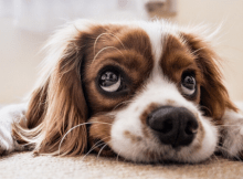 toxins poisoning your pet