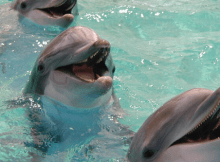 dolphins missing humans