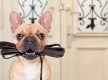 pet owners and covid19